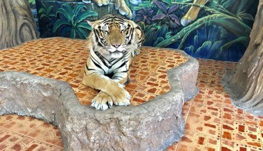 TVでも話題!トラや象と遊べる!?シラチャタイガーズーを120%楽しむ方法