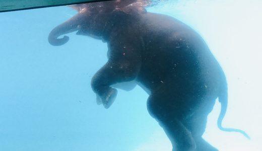 """割引チケットでお得に楽しもう!タイのチョンブリ県にあるオープン動物園""""Khao Kheow Open Zoo Thai""""(カオキアオ動物園)"""